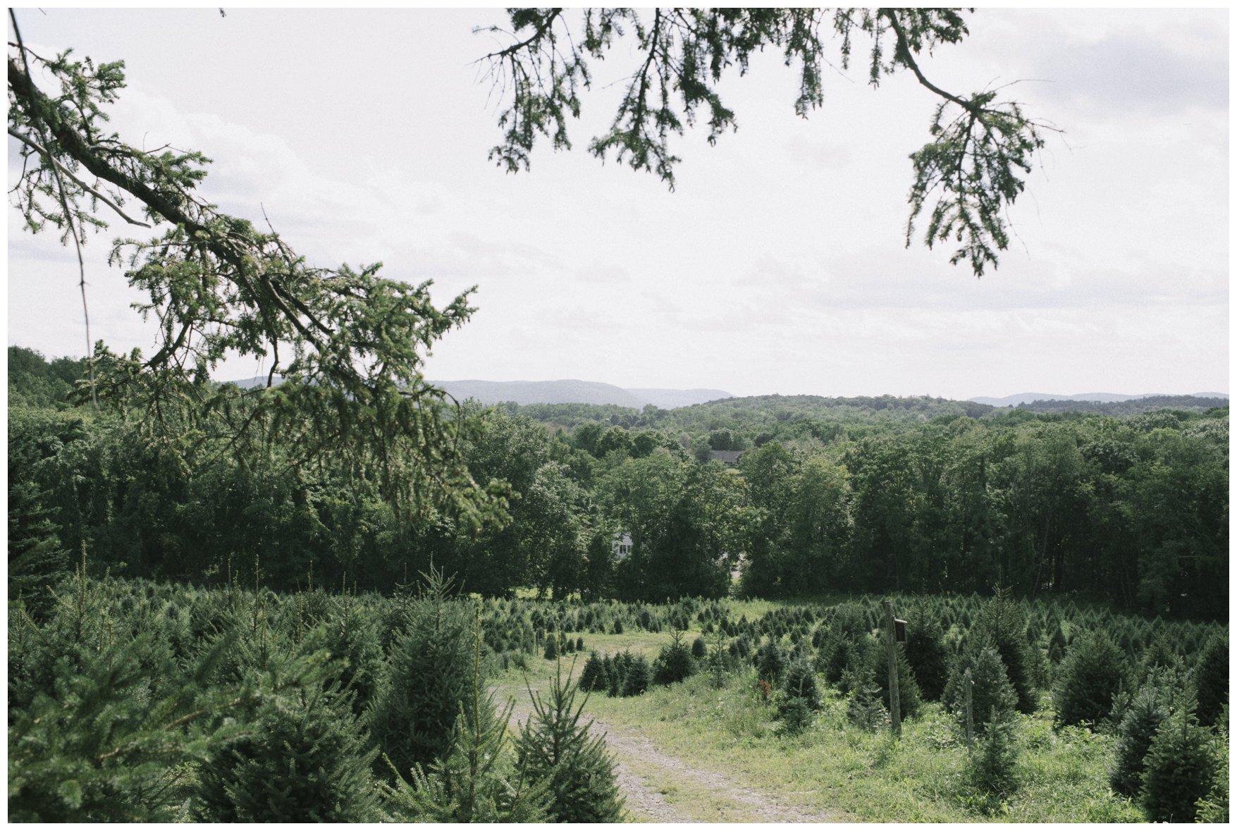 Emmerich Tree Farm Wedding_0293.jpg